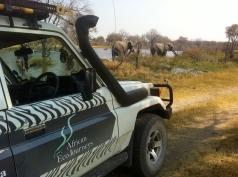 EcoJourneys-Elephants (1)
