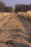 Sand track - Central Kalahari