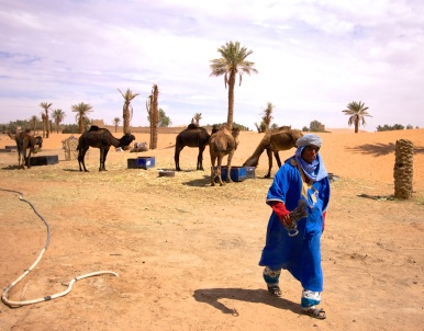 One of the guides and a few of the camels used by Le Petit Princess for overnight desert trips.